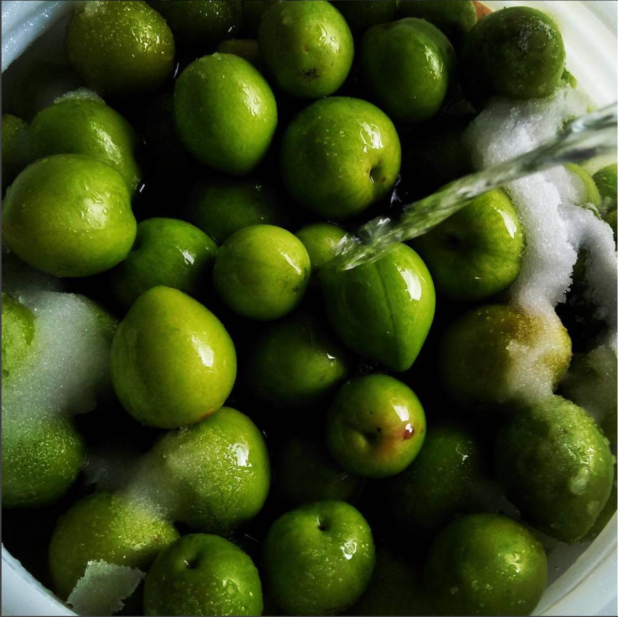Umeshu-plums-1.jpg