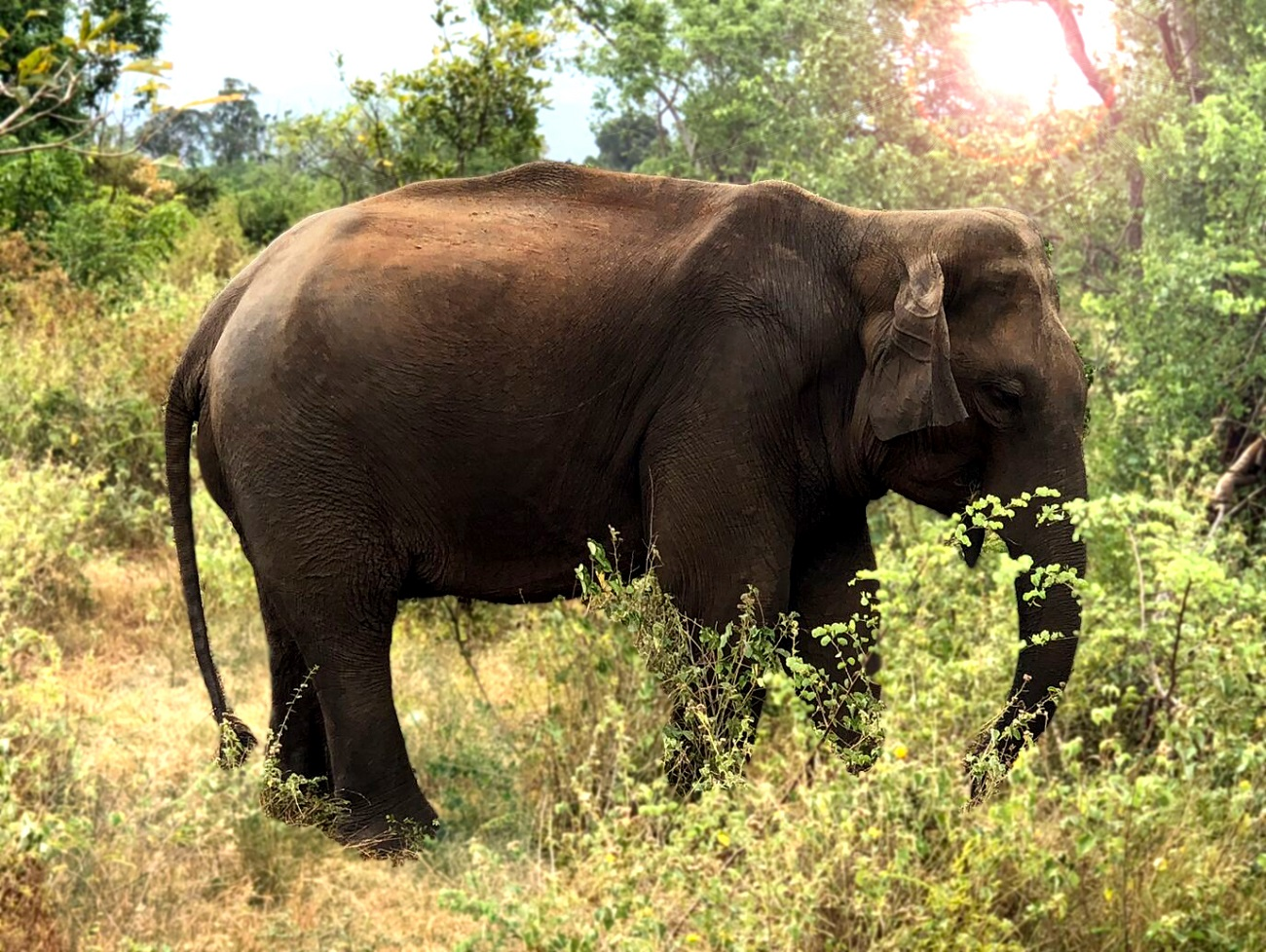 Udawalawe Wildlife Safari -