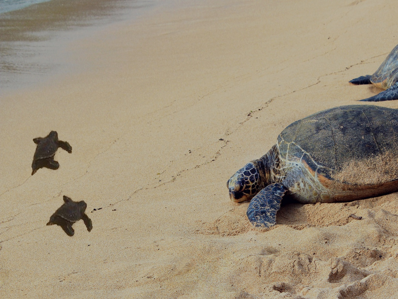 Turtle Hatchery Tour -