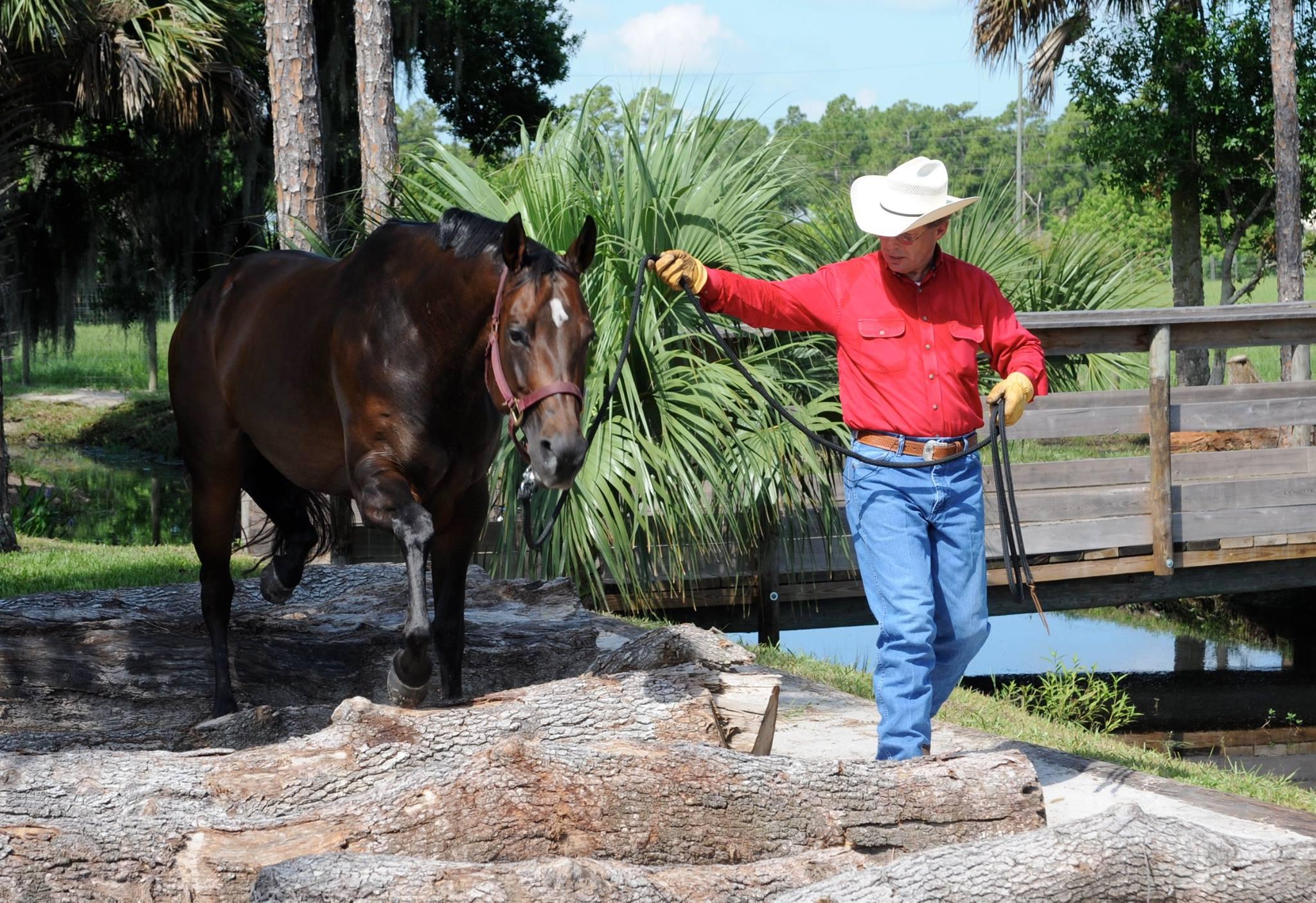Photo From Bolender Horse Park USA