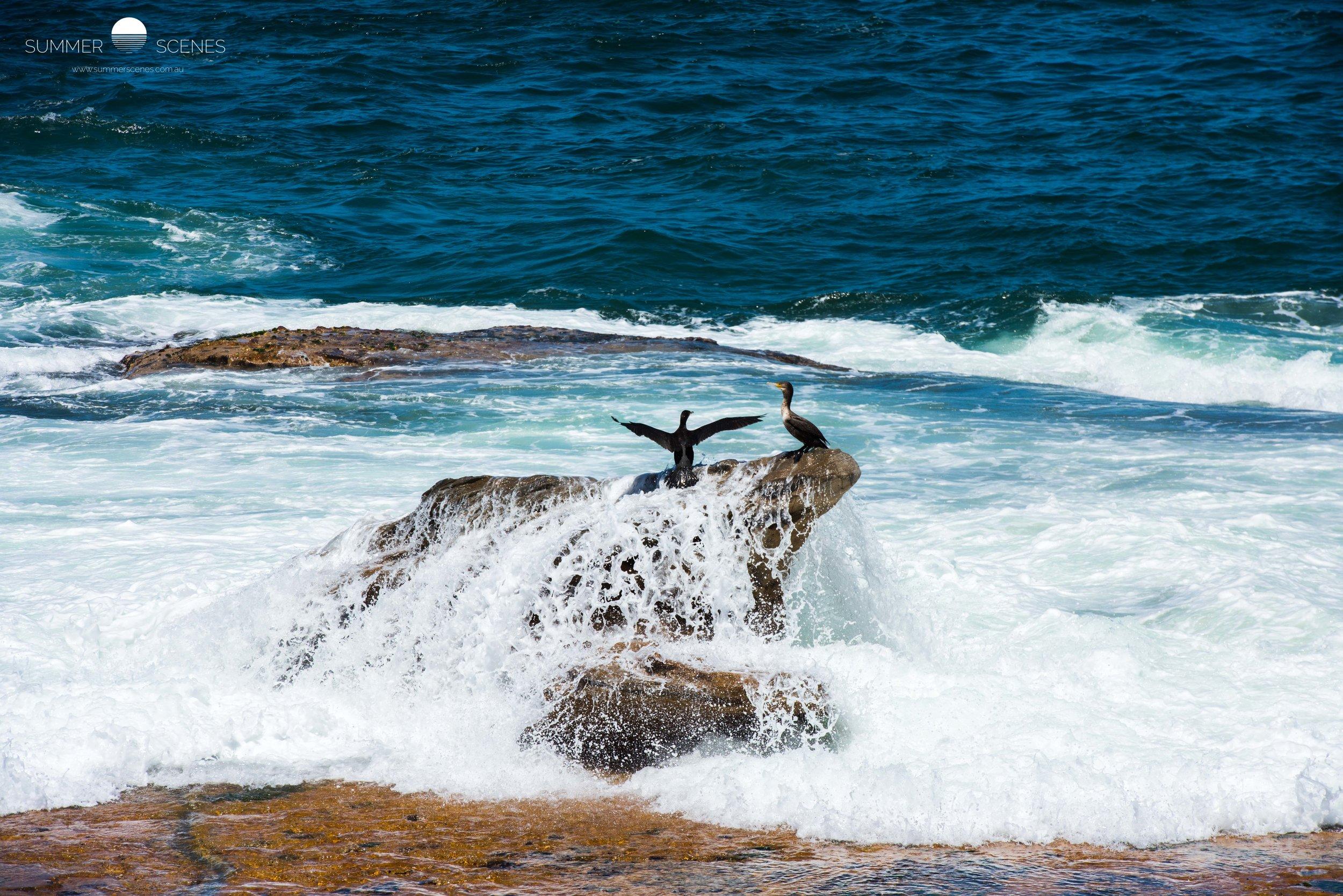 Surfer Bird.jpg