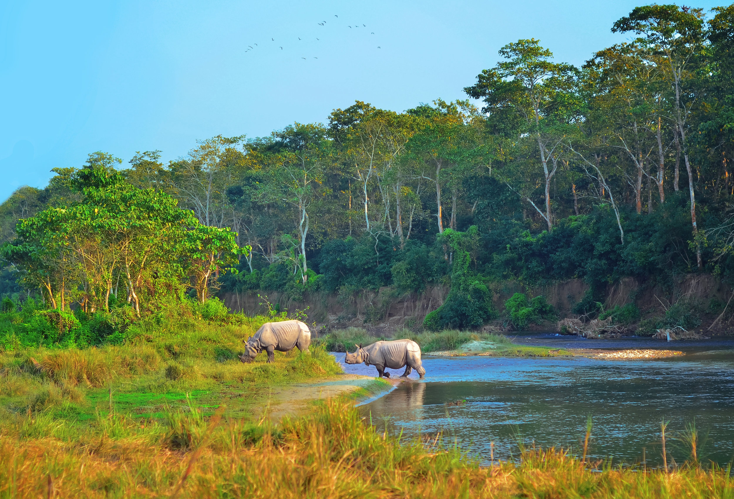 chitwan national park - jeep safari - Our Chitwan Safari has been newly revamped for 2018! You'll transfer to Chitwan National Park, one of the most impressive wildlife-viewing parks in Asia, for a Jeep Safari, and a visit to a local Tharu community on your first extension day.Trip Duration: 3 nights/ 4 daysReg. Fee: £95Balance Payment: £325
