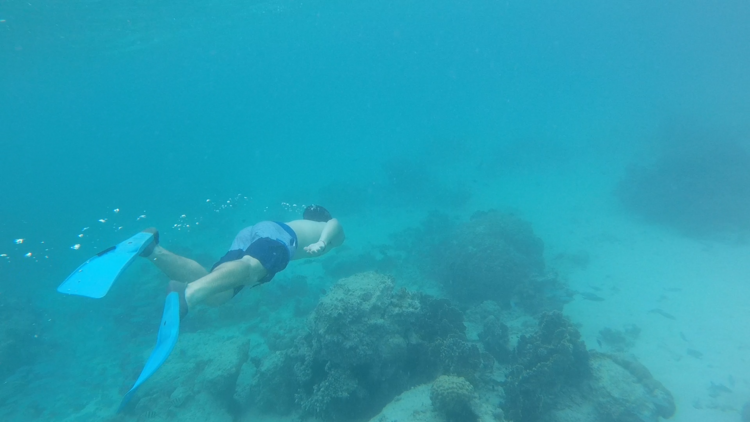 Snorkelling in Zanzibar.png