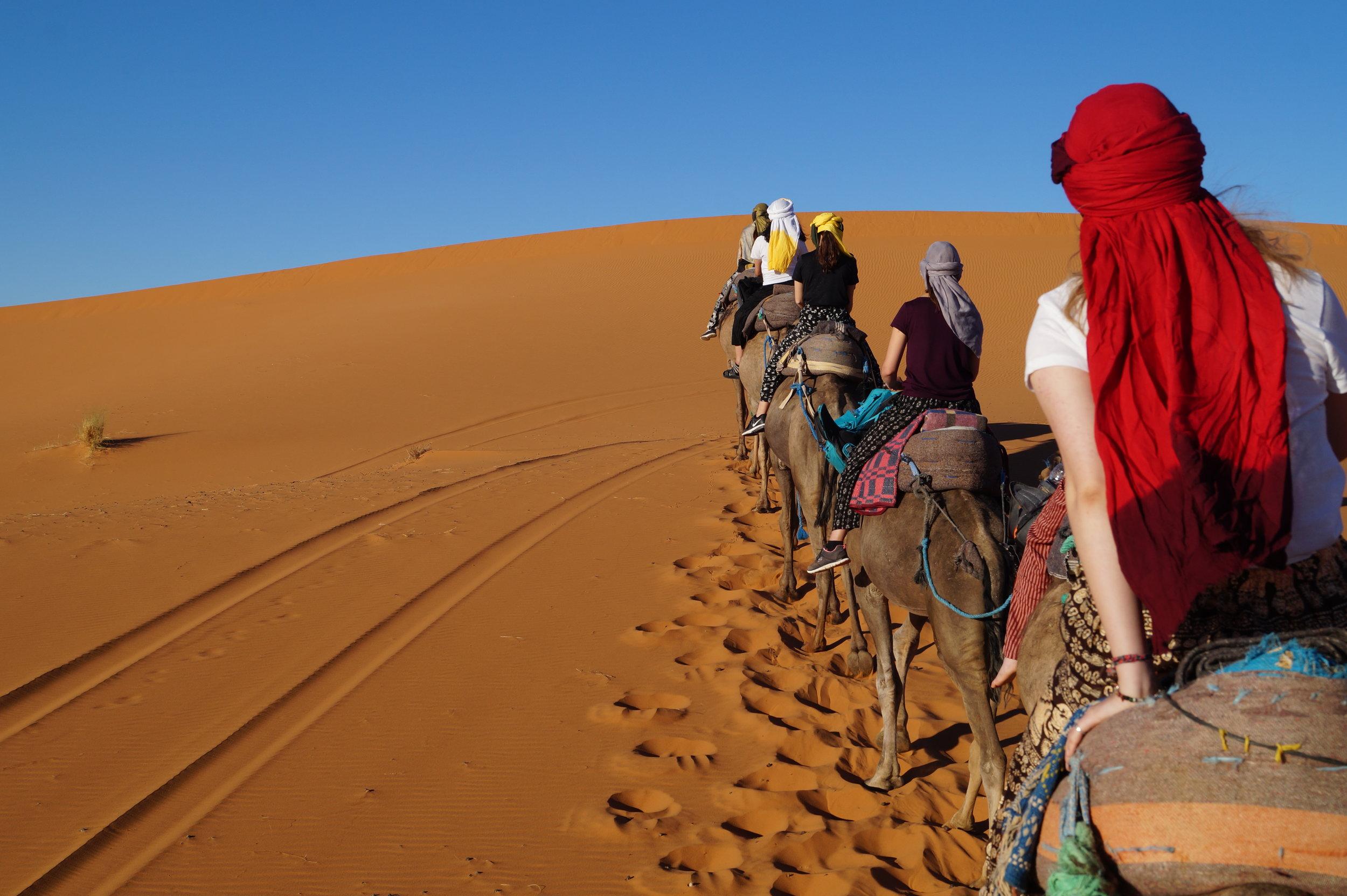 Camels in Moroccan Desert.JPG