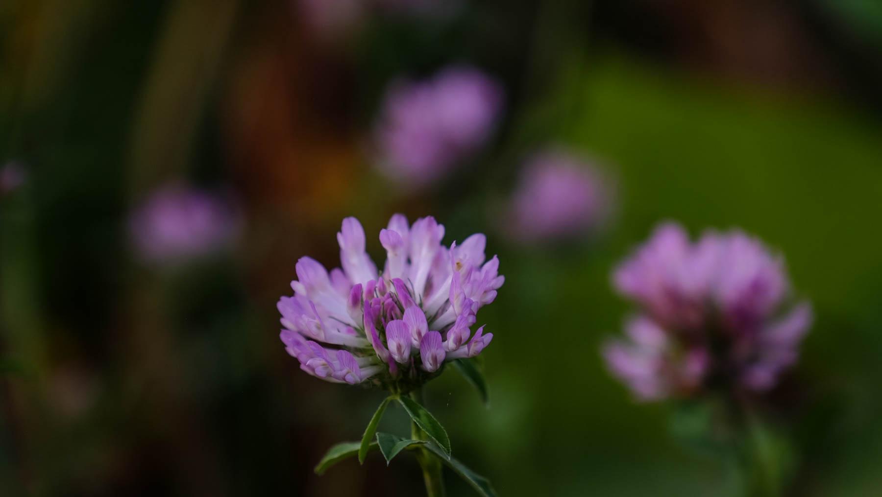 garden-6.jpg