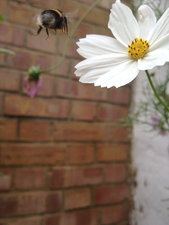 Approach of the Bumble BeeSM.jpg