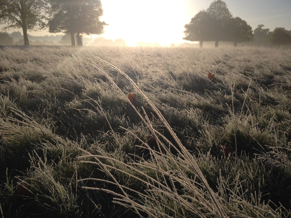 Frosty morning SM.jpeg