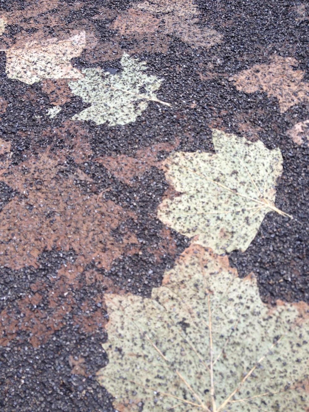 Leaves imprinted SM.jpeg