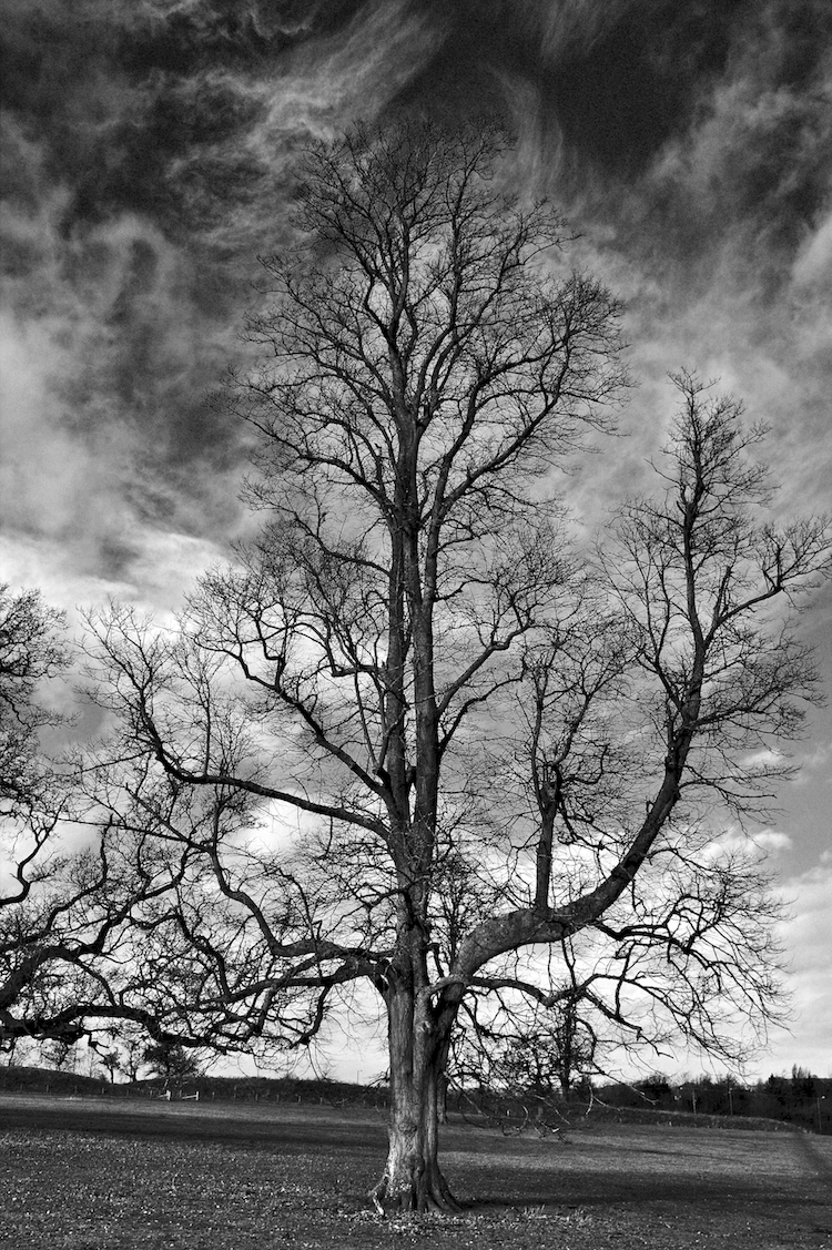 One Tree 4645 D SM.jpeg