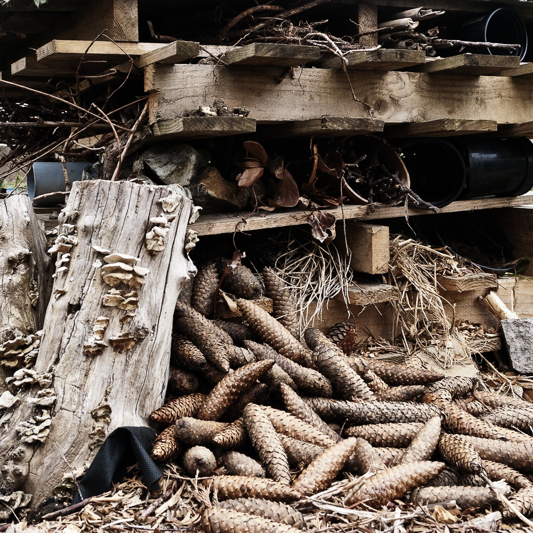 INSECT HOTEL by John Mobbs LR.jpg