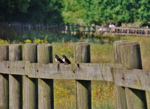 two little birdies.jpg