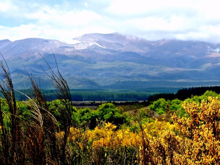 New Zealand - November 2014 - En Route To Tongariro National Park_Copy.jpeg