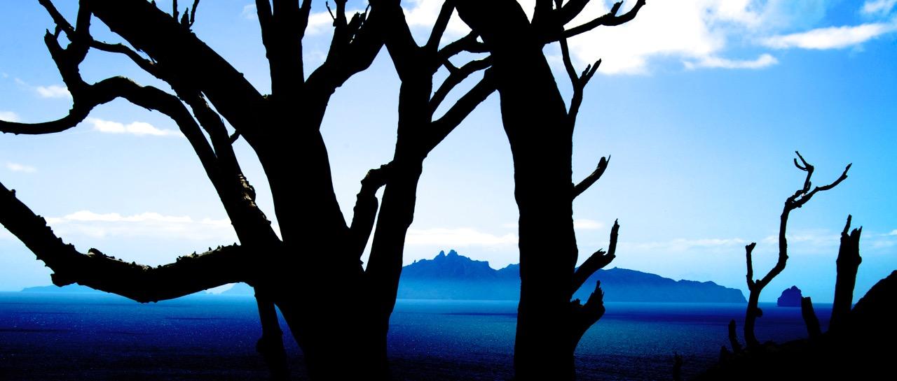Blue tree Mangawai.jpeg