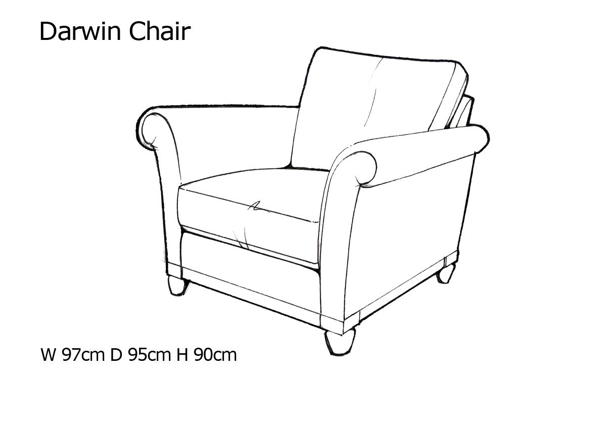 darwin chair.jpg