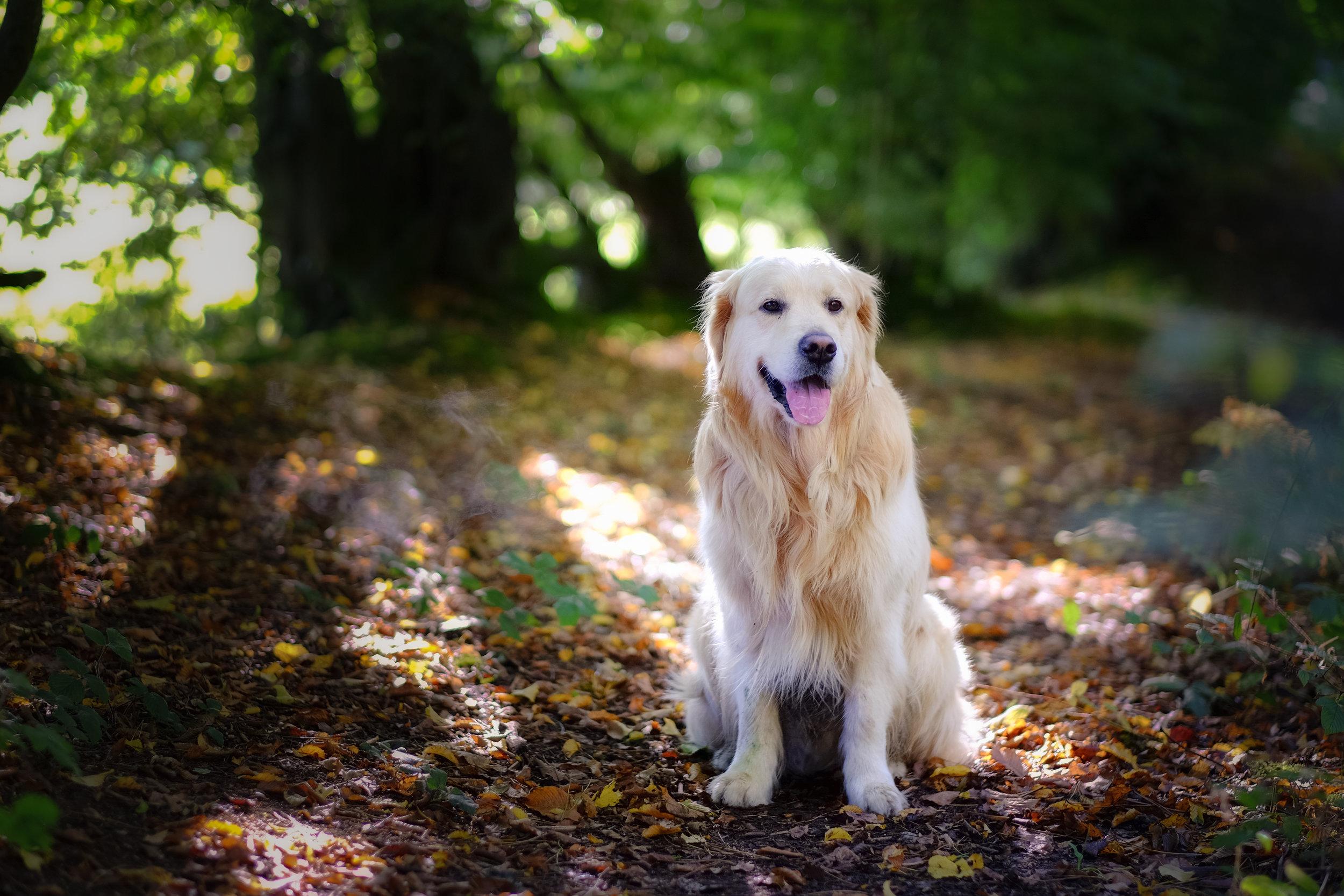 Pet photography - Buckinghamshire