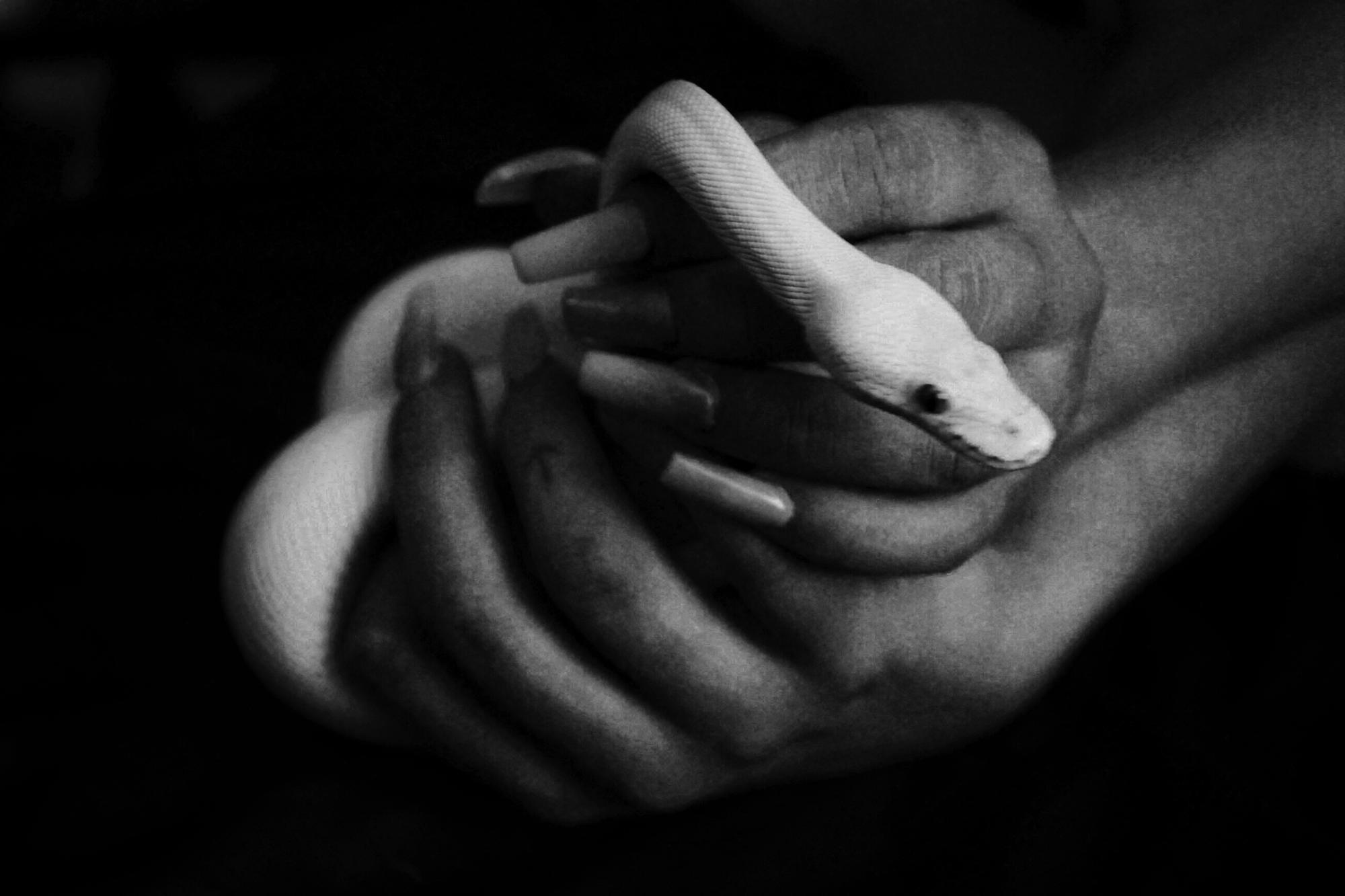 Turtle Bugg & Kelsey's snake,  White Boy Rick