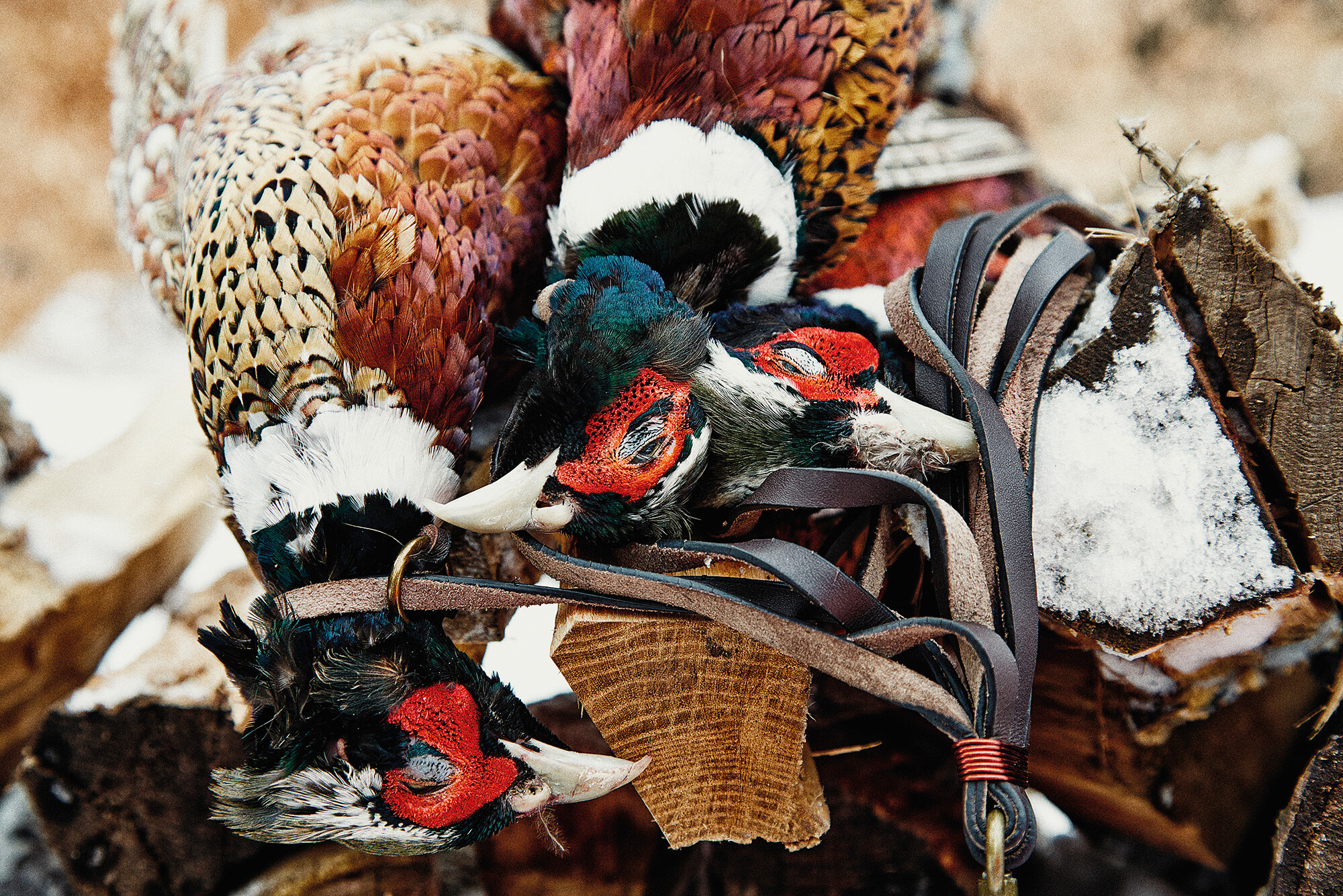 03_Danny-Christensen---The_Urban_Huntsman_Pheasant_1.jpg