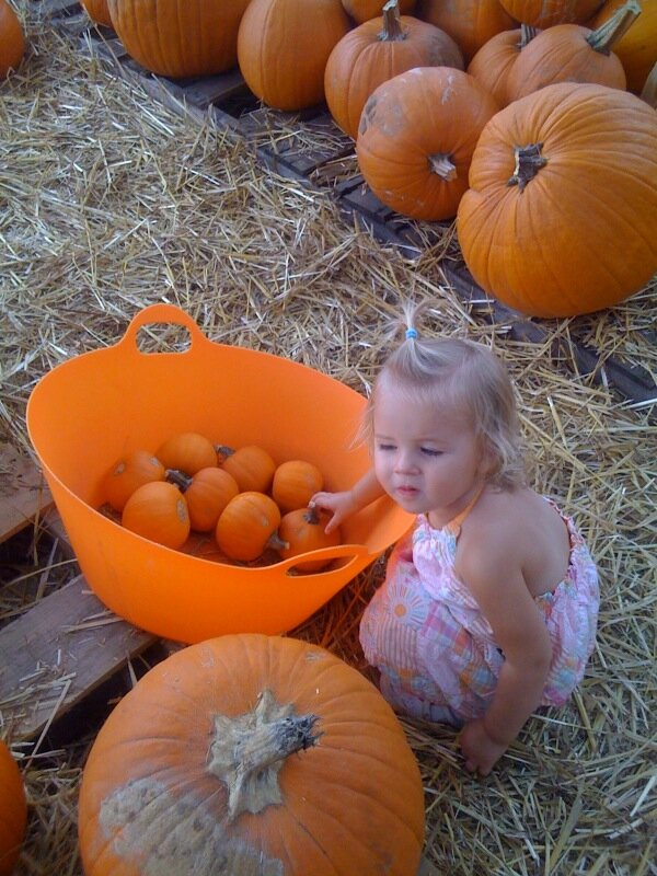 Pumpkin Patch4.jpg