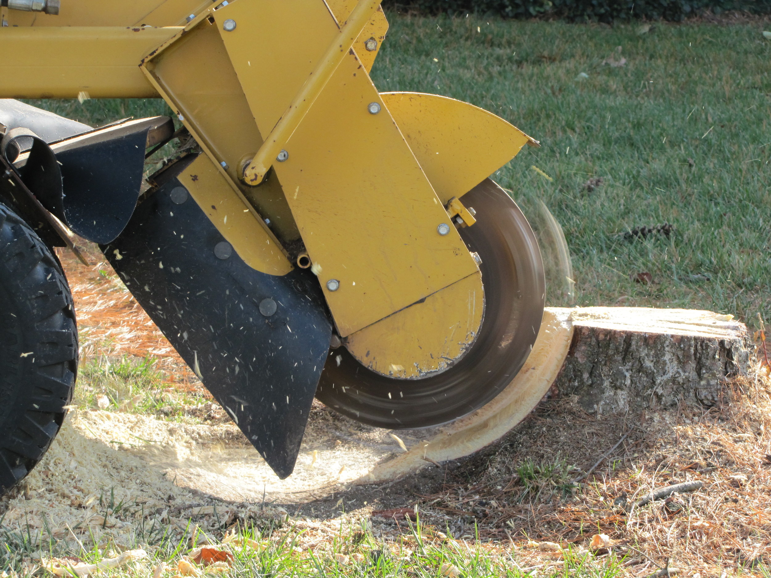 STUMP REMOVAL - Dorshak Family Tree Service has a number of different stump grinding options to help you get rid of that unwanted or unsightly stump in your yard. Click here for more about Stump Grinding Services.
