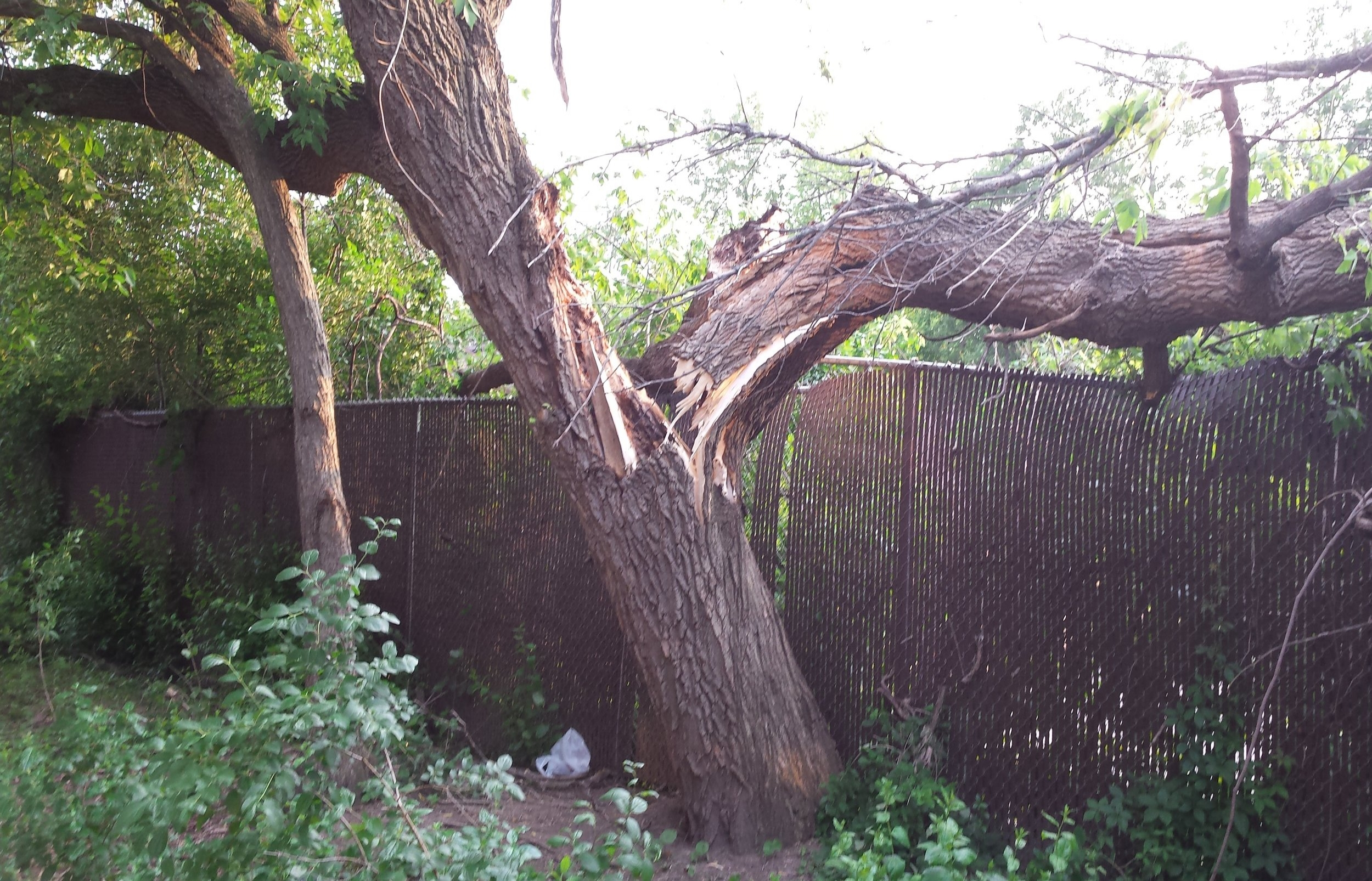 EMERGENCY STORM DAMAGE - When severe storms strike they can cause major damage to property and homes. Dorshak Family Tree Service has complete 24 hour Emergency Storm Damage services to help restore your property after a storm. Click here for more about Emergency Storm Damage Services.