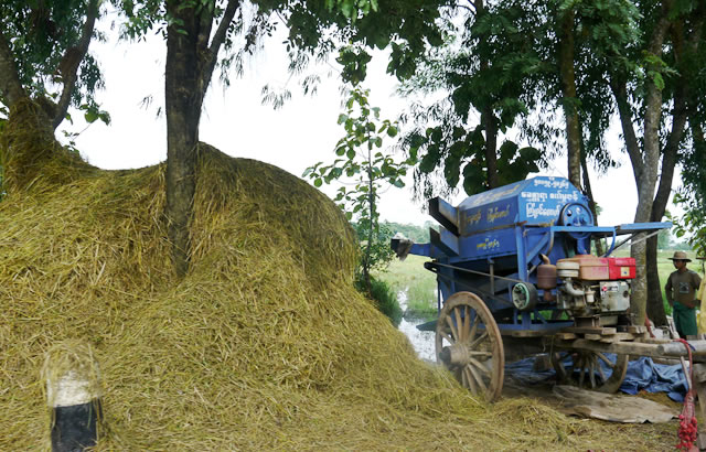 Communities can work together to harvest and process their rice