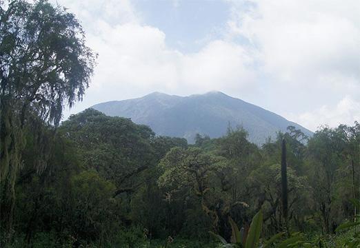 Burundi forest