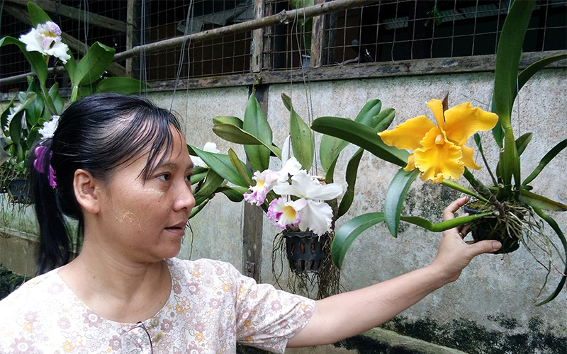 Naw Yin's Orchid Business in Myanmar