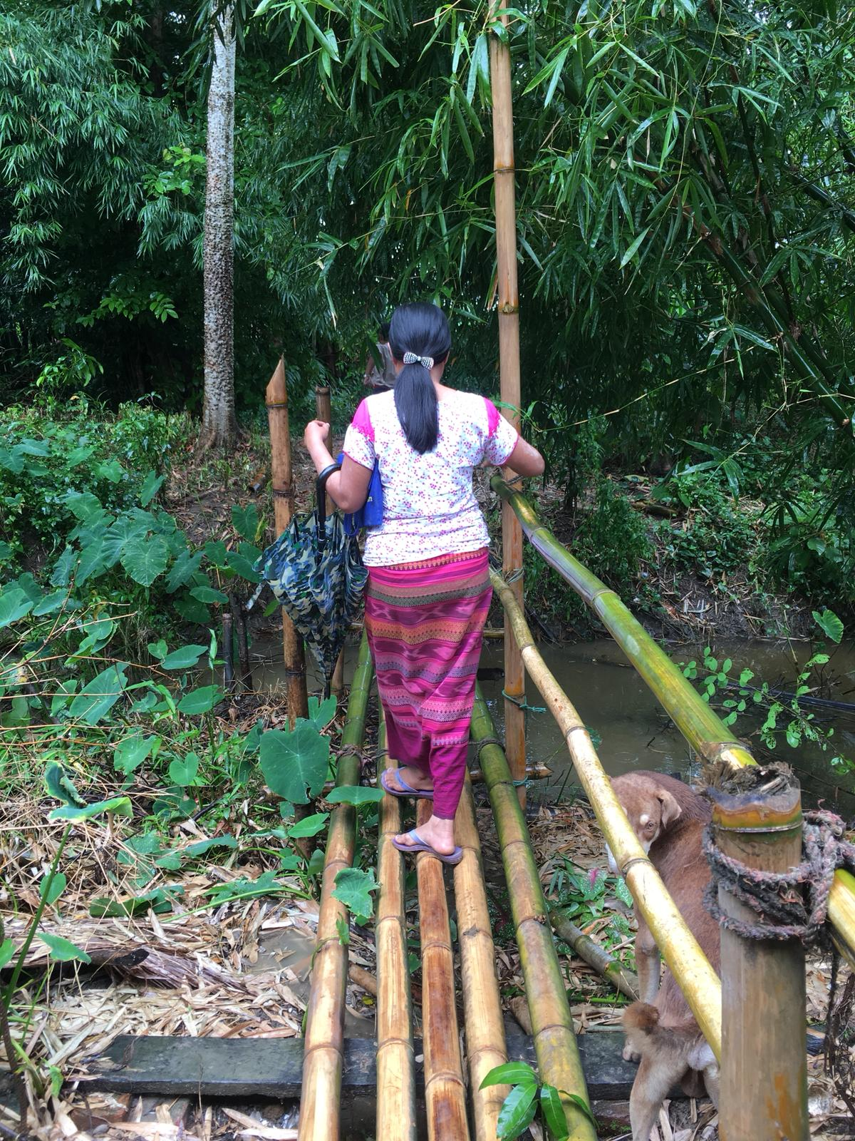 Bamboo grows naturally in many parts of Myanmar and is often used in construction of homes, fences, or even simple bridges like this one.