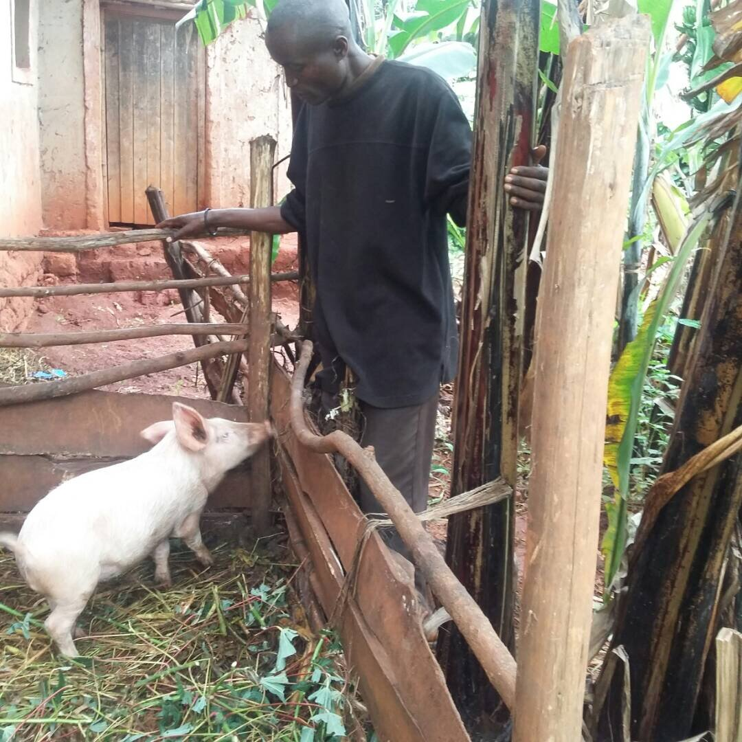 Elie inspects an enclosure where he keeps his pigs in Burundi