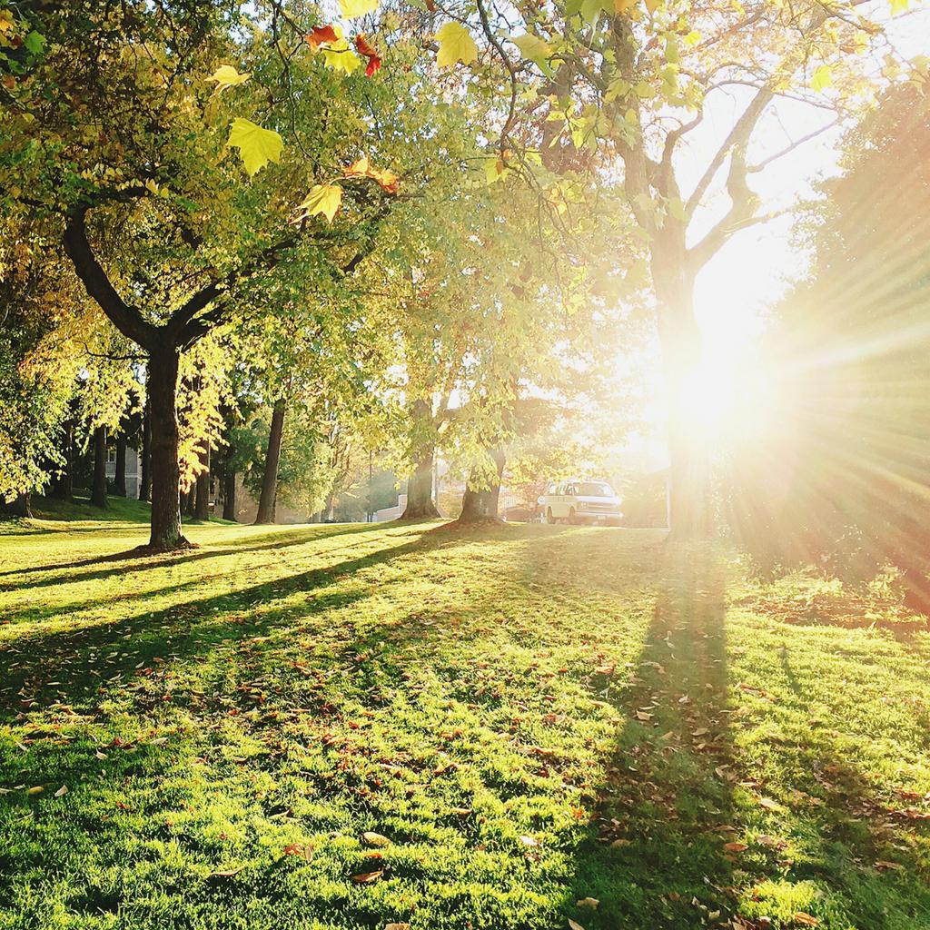 Madison Nickel - Sunlight in a park
