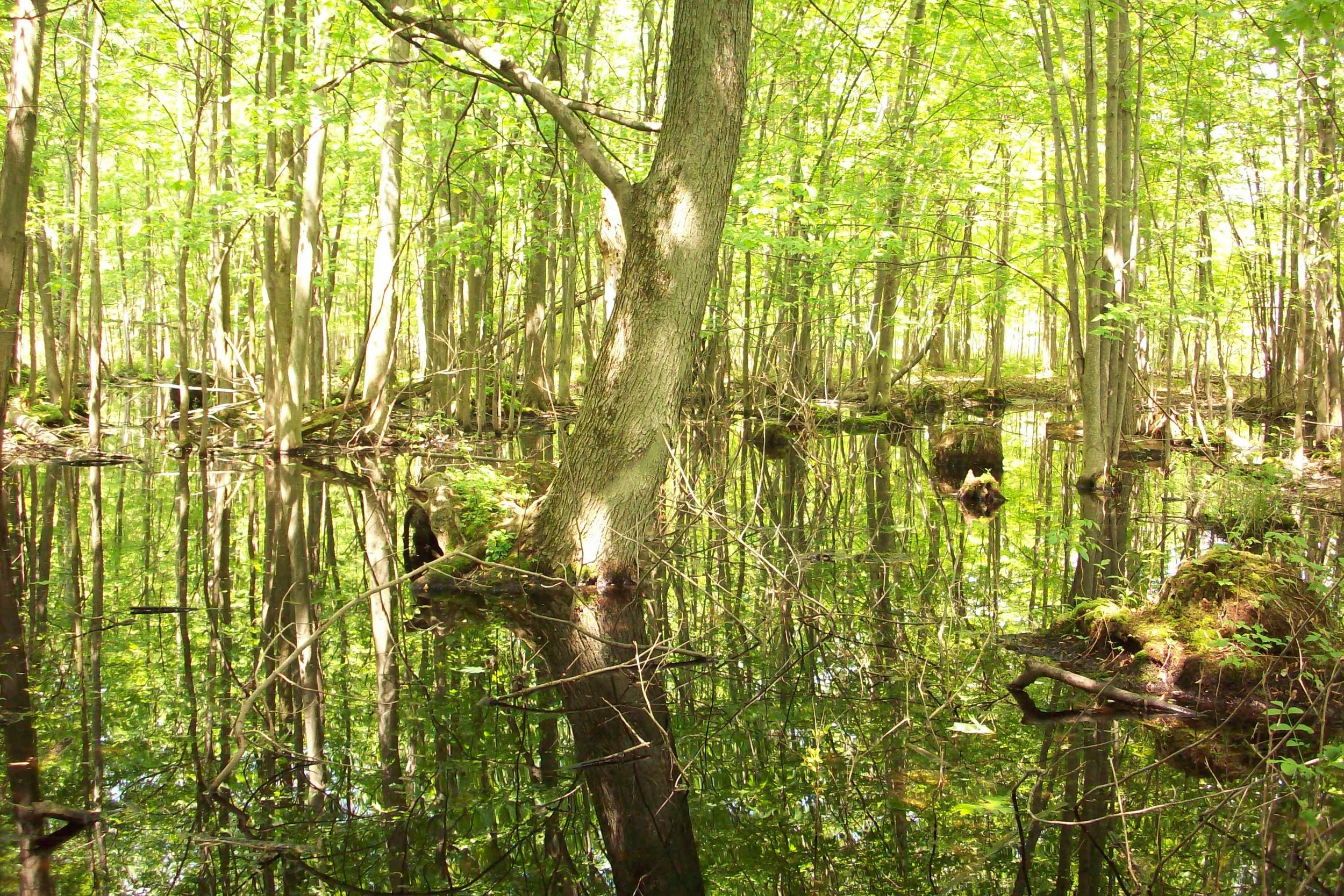 Project Photo-Wetland at Mill Seat Landfill.JPG