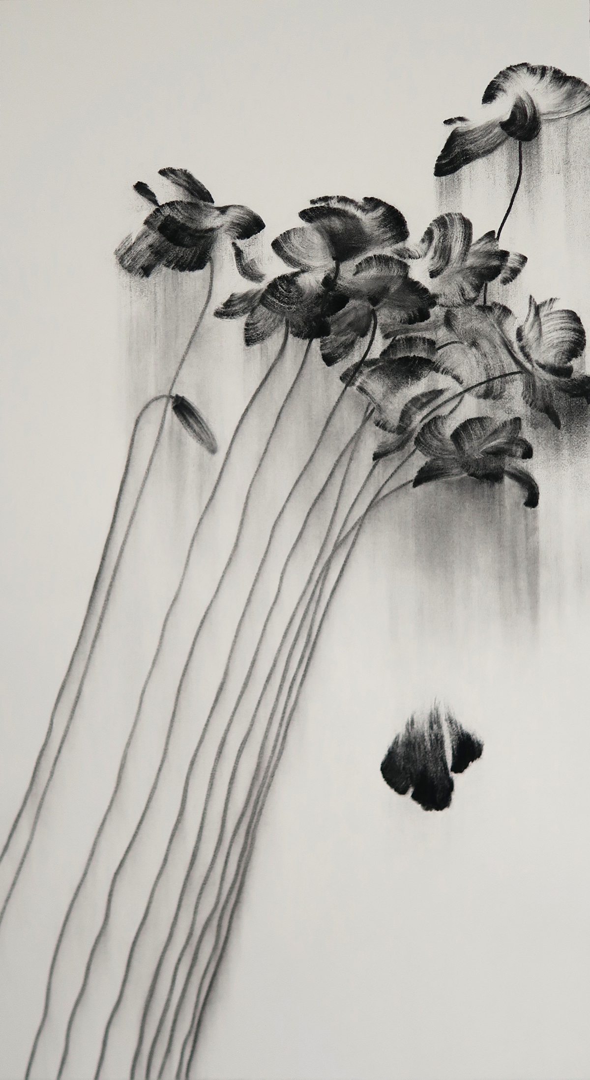 "Rise and Fall    Charcoal on paper 2017 100cm x 55cm  sold. Exhibited at Art Porters Gallery ""Flower Flights"" solo exhibition.  past series:  Flower Flights"