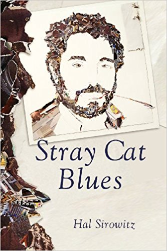 7 stray cat.jpg