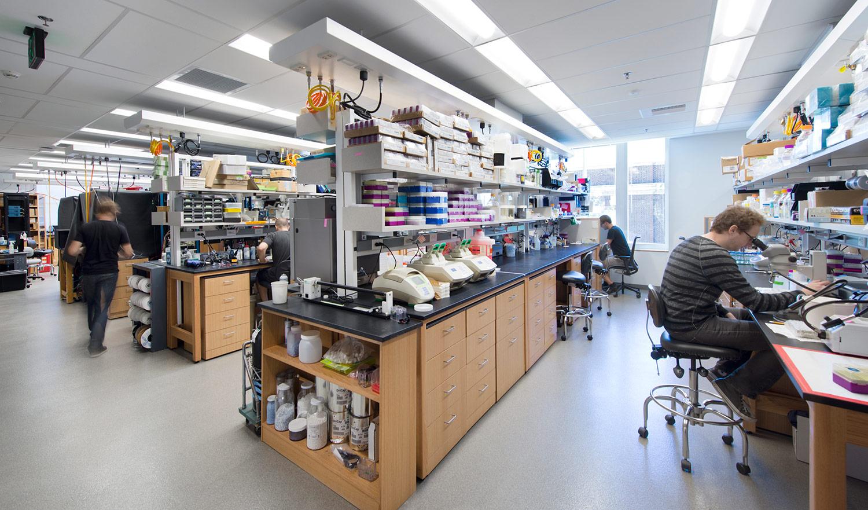 Harvard Medical School, Sabatini Neurobiology Lab