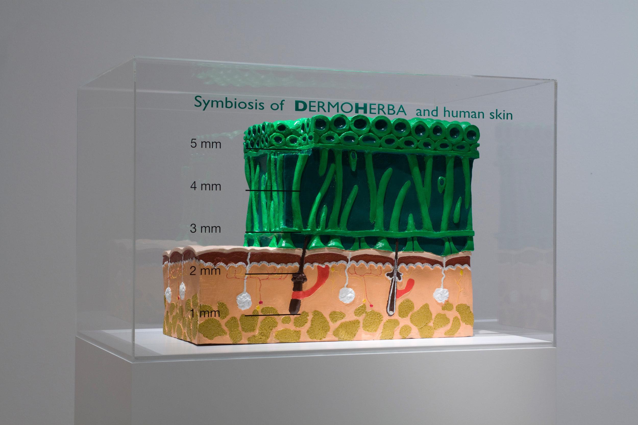 Eurofarm – DERMOHERBA 2000, human symbiotic plant