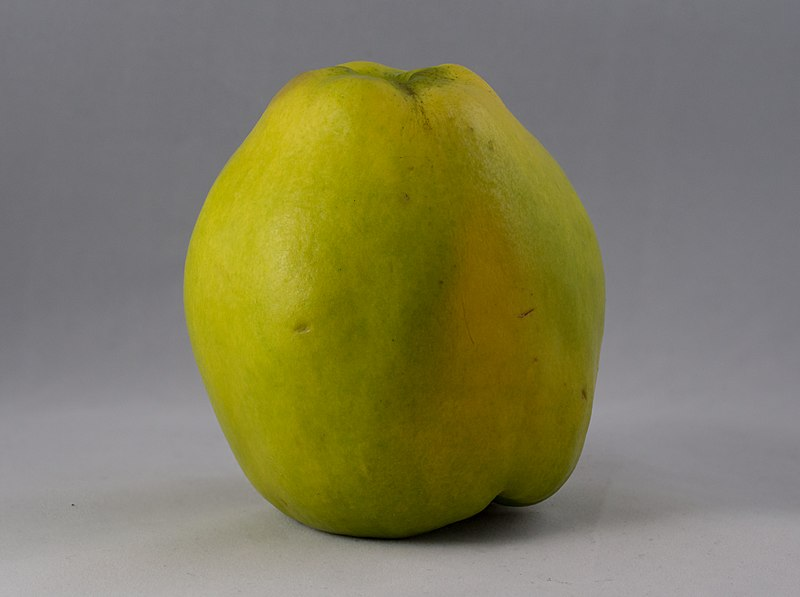Photo credit for image of a Quince: By Rhododendrites (Own work) [CC BY-SA 4.0 (https://creativecommons.org/licenses/by-sa/4.0)], via Wikimedia Commons.