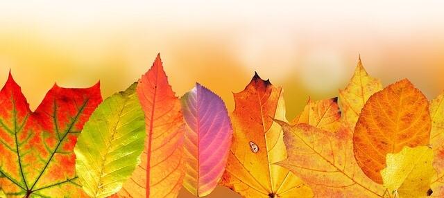 2TAAL 1117 leaves1.jpg