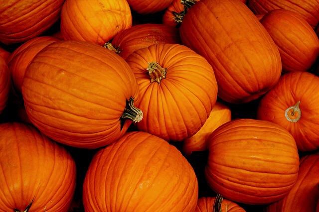 5TAAL 1117 pumpkins2.jpg