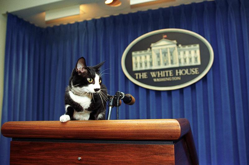022 Public domain in the US Socks being Presidential 105.jpg