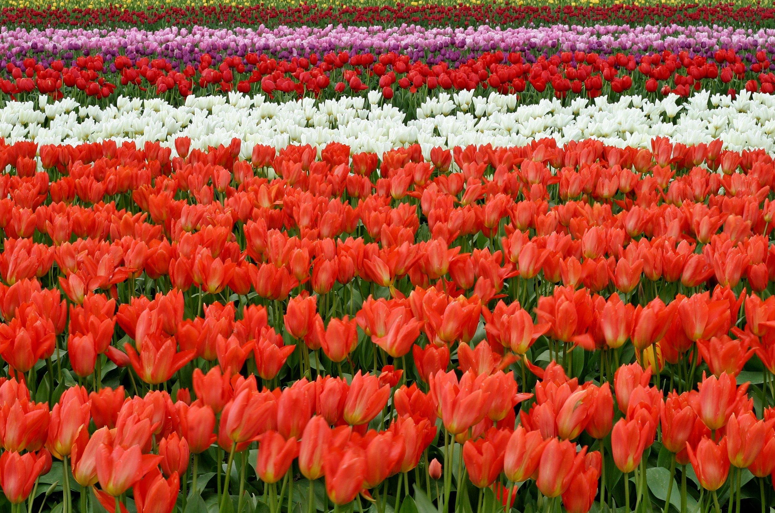 lips-flowers-fish-eye-red-66902.jpeg