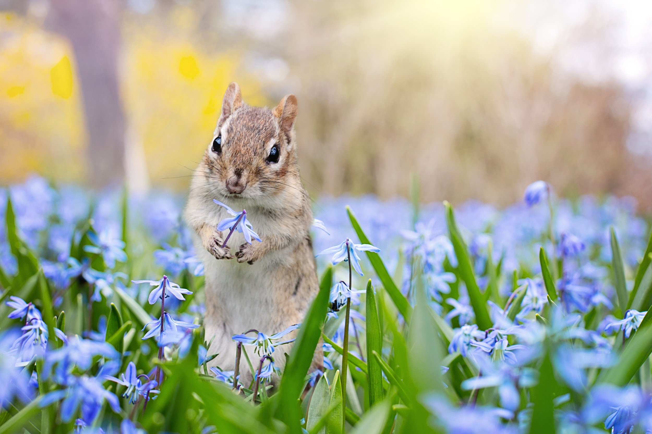 squirrel2.jpeg