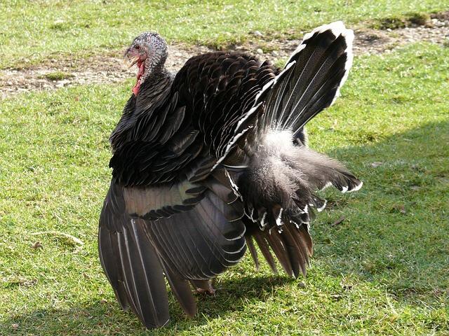 6 TAAL 1117 turkey 1.jpg
