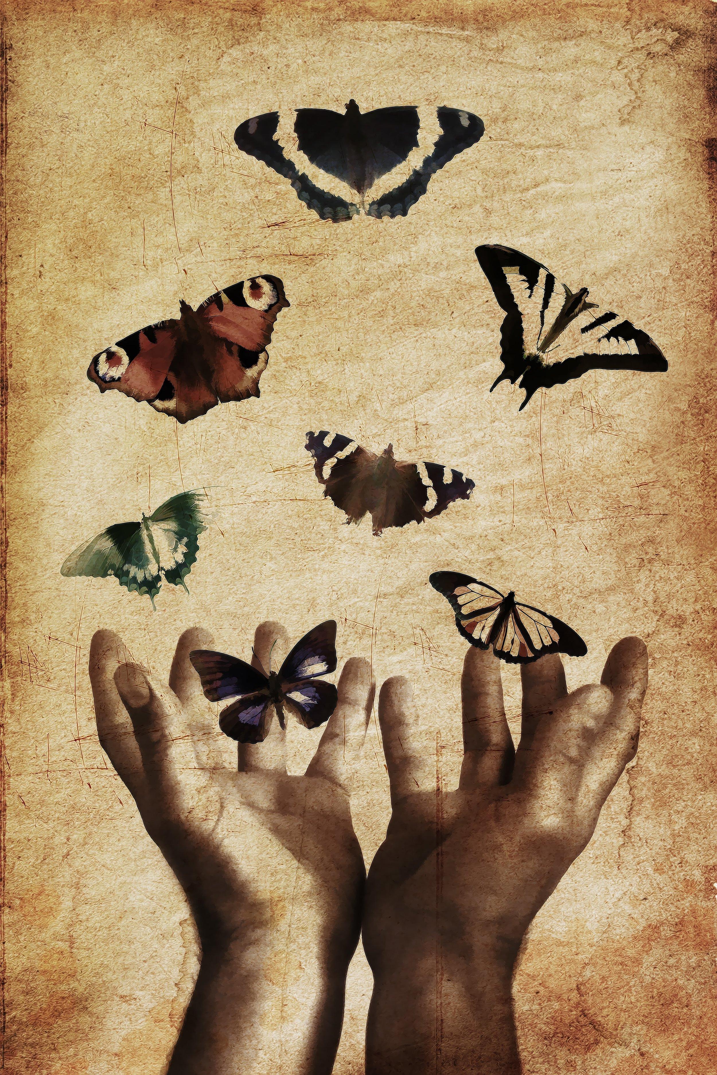 123 TAAL 1117 butterfly.jpeg