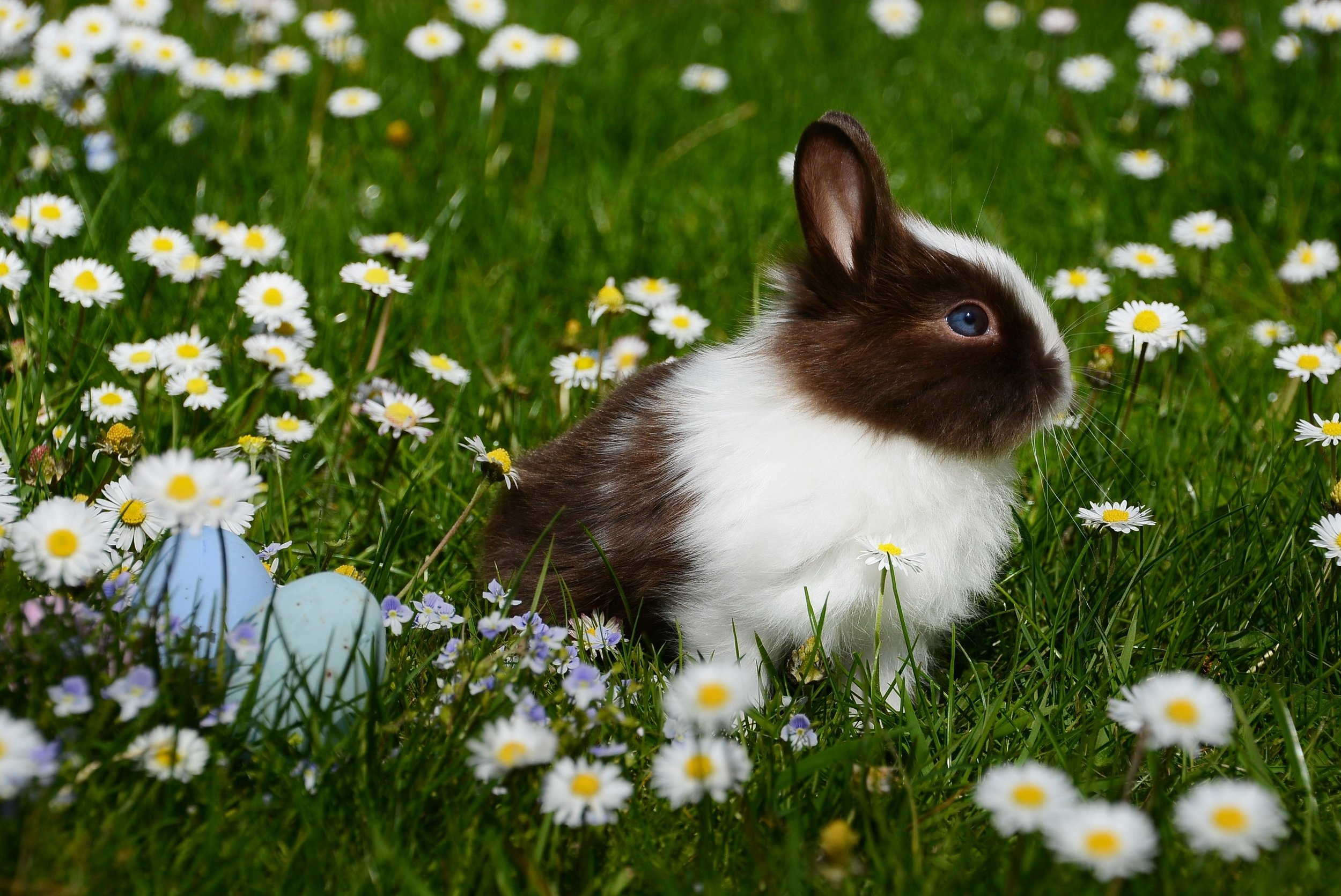 113 animal-bright-bunny-372166.jpg