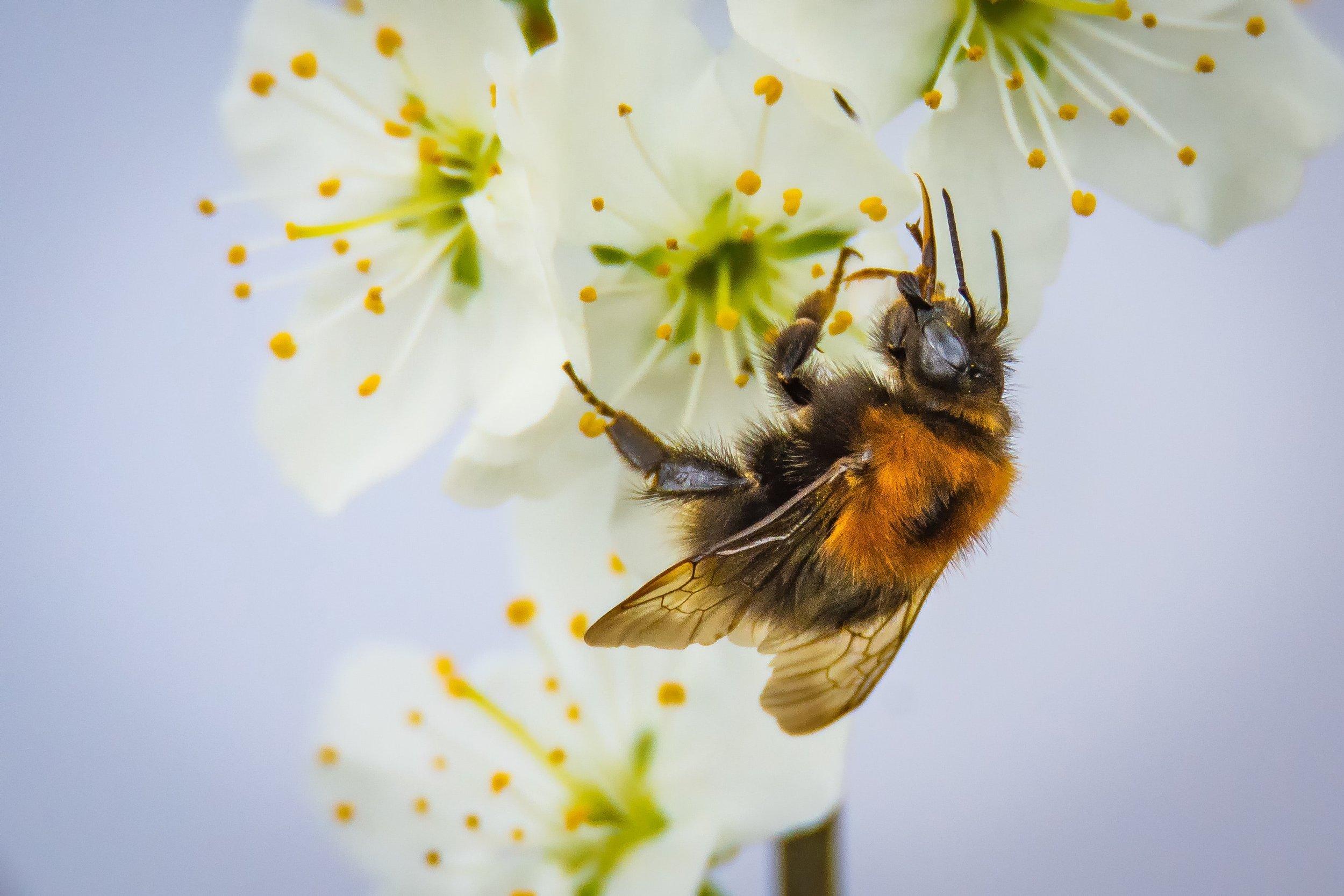 113 animal-beautiful-bee-416292.jpg