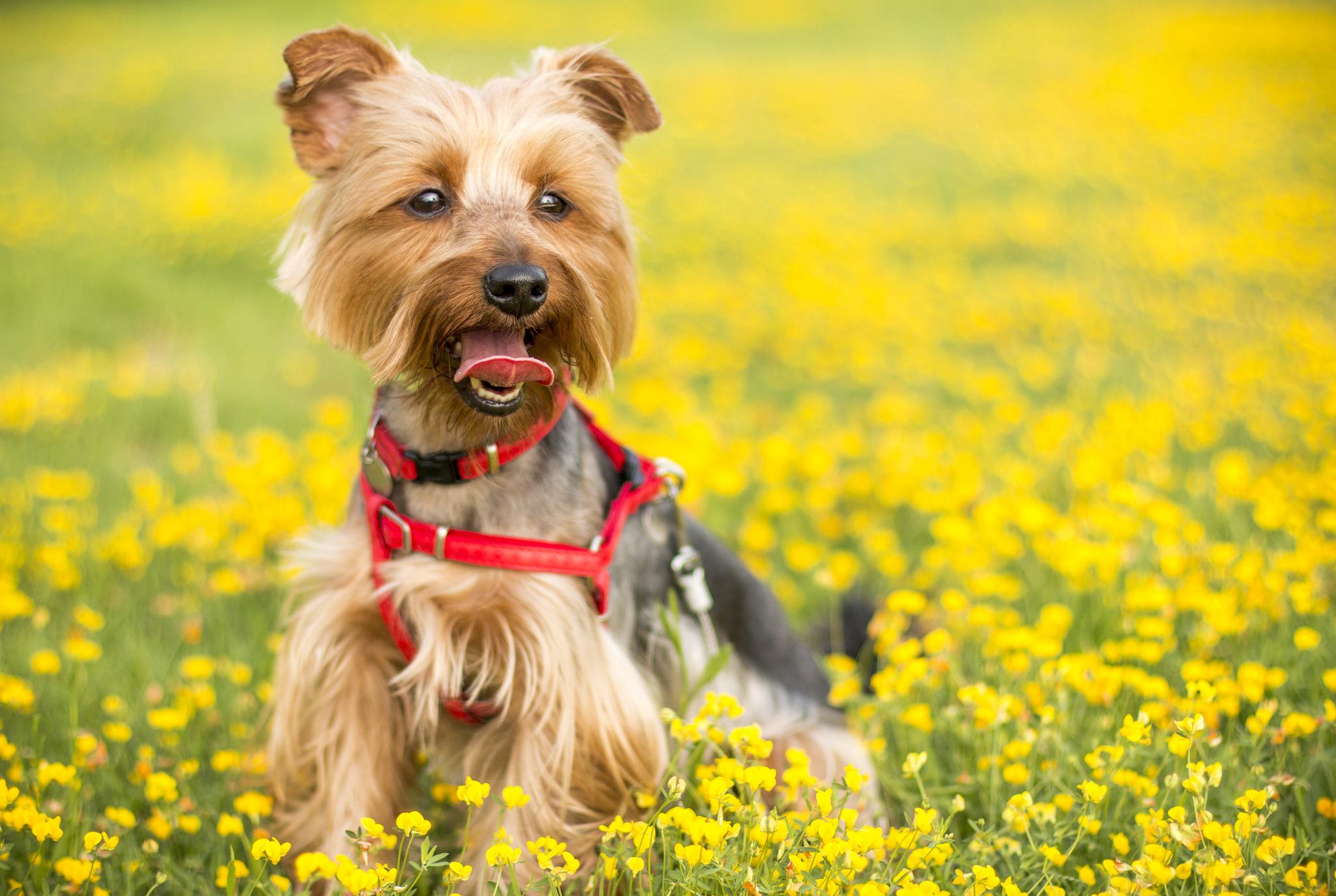 dog in flowers.jpeg