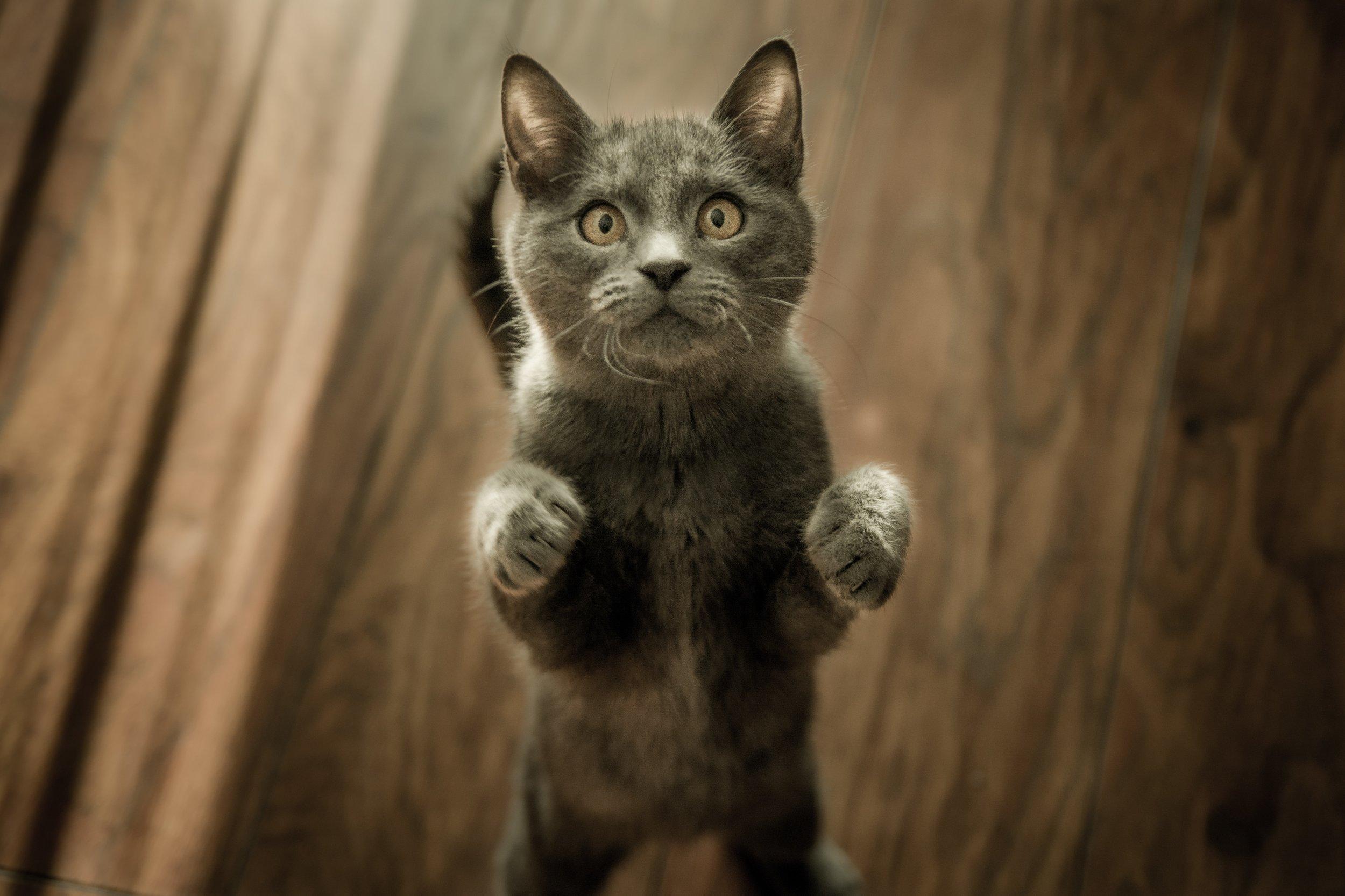111 adorable-animal-animal-photography-774731.jpg