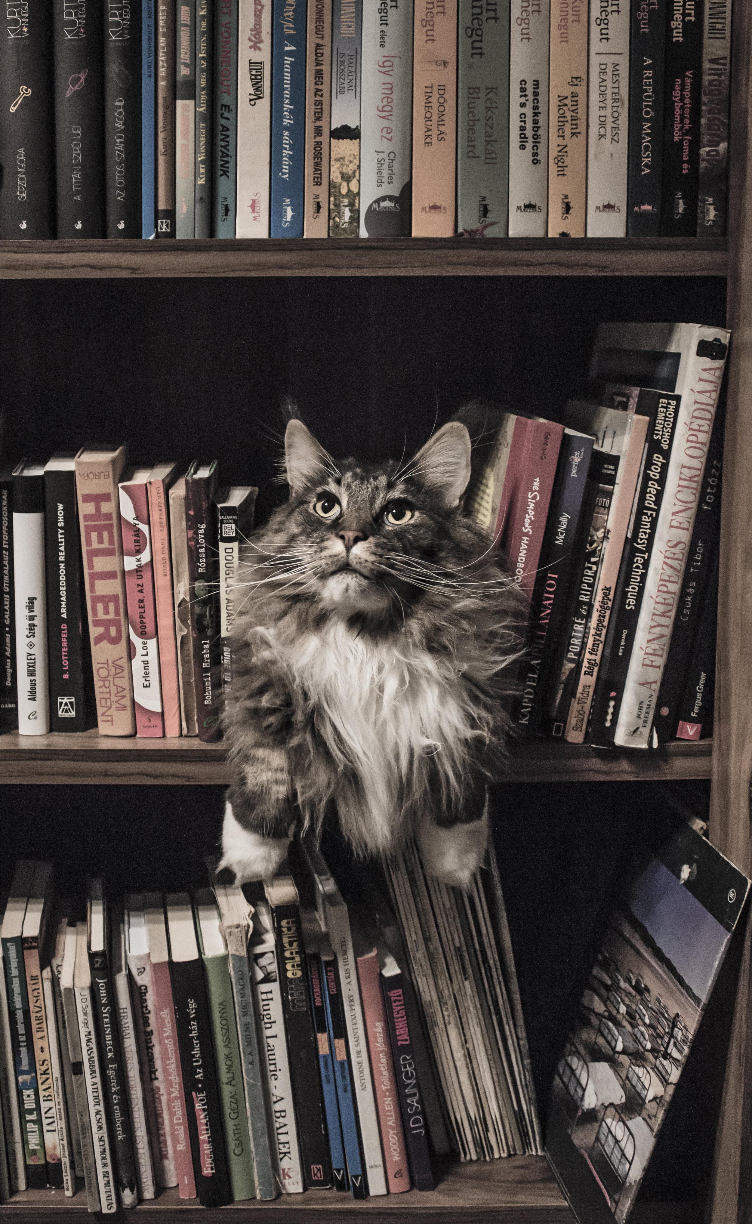 014 TAAL books image3.jpeg