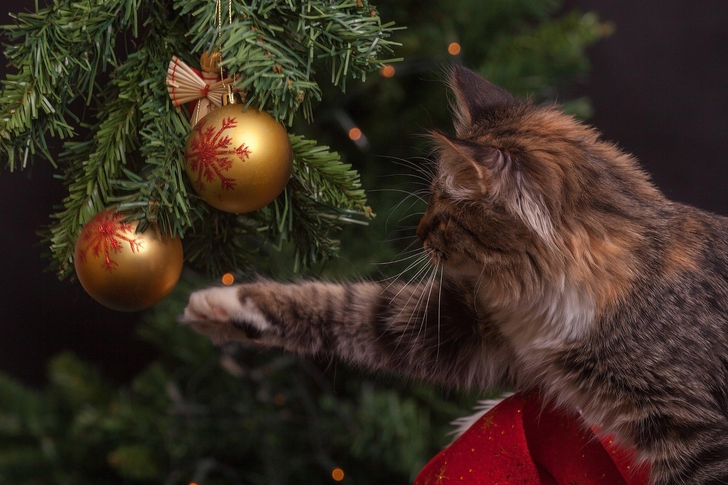 107 a4 ball-blur-cat-236586.jpg