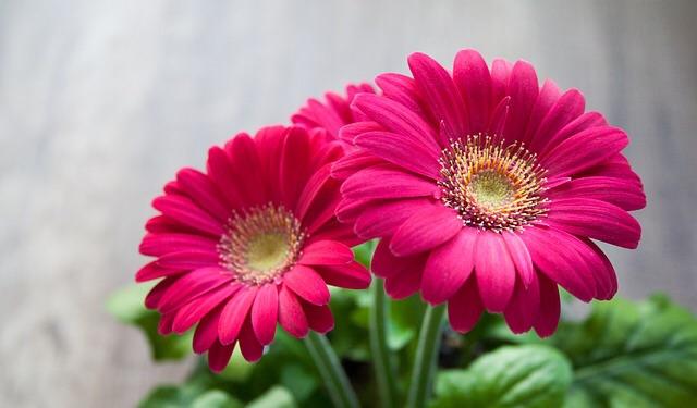 flowers pets1.jpg